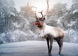 5 lessons rudolph red nosed reindeer mamiverse