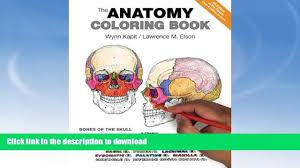 100 human anatomy coloring pages anatomy coloring pages muscles