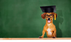 dog graduation cap school in session the second lesson about personal injury
