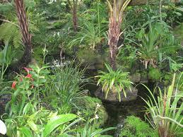 Atlanta Botanical Gardens by File Indoor View Atlanta Botanical Garden Jpg Wikimedia Commons
