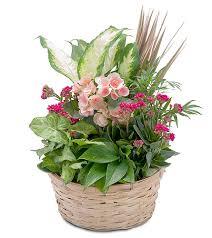 cincinnati florists jones the florist cincinnati florists flower delivery in cincinnati