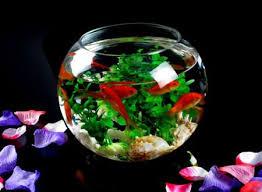 high quality home decor glass fish shaped bowl view glass fish