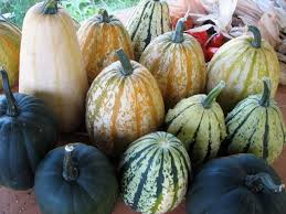 edible gourds lirsc