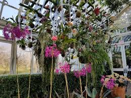 Botanical Garden Orchid Show The Orchid Show At The New York Botanical Garden Is Their Most