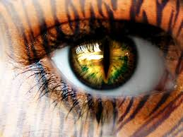 the eye of the tiger for magazine