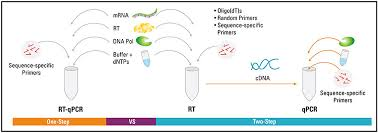 bureau de la pcr basic principles of rt qpcr thermo fisher scientific