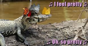 Alligator Meme - i can has cheezburger alligator funny animals online cheezburger