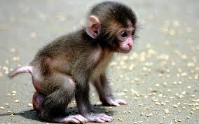 cutest baby animals ever