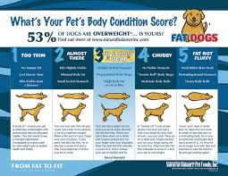 belgian shepherd weight chart prevent pet obesity with the k9 kamp canine fitness event fat