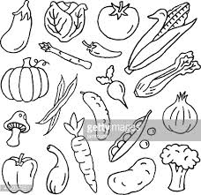 vegetable in charcoal sketch style vector art getty images
