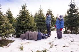 find where to cut trees for christmas near albuquerque