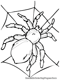 Draw Bugs Coloring Pages In Free Kids With 104 Wonderful Spider Web Coloring Pages