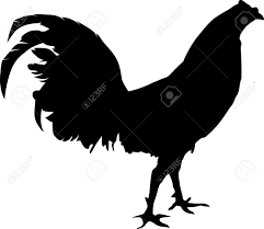 fighting rooster silhouete walking around royalty free cliparts
