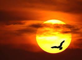 macedonian sun and the bird generation m