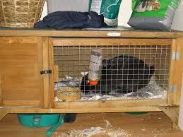 Rabbit Hutches For Indoors Home And Interior Inspirations U2014 Pichafh Com