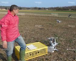 cuisine des pigeons voyageurs edition d epinal les pigeons voyageurs reprennent leur