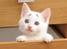 Grump Cat Meme Generator - grumpy cat meme generator concerned kitten meme ben lashes agent