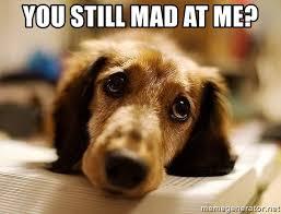 You Still Mad Meme - you still mad at me sad doggie meme generator