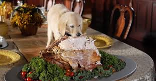 blackmouthcurs which thanksgiving foods are safe for dogs