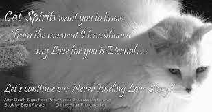 grieving the loss of a pet cat loss quote greiving cat loss inspirational cat