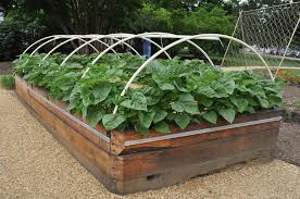 How To Design A Flower Bed How To Design A Raised Bed Vegetable Garden Gardening Ideas