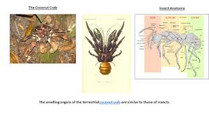 100 arthropod dissection study guide answers reading fetal