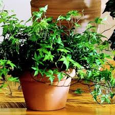 17 best images about indoor planting on pinterest english grow