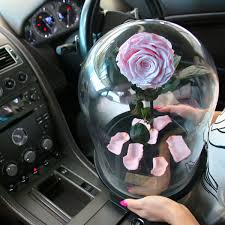 enchanted rose that lasts a year a lasting belle rose domes rose that lasts a year real roses
