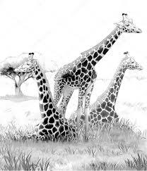 safari giraffes coloring page illustration for the children