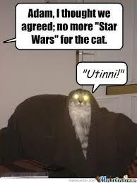 Star Wars Cat Meme - star wars cat by mwandia meme center
