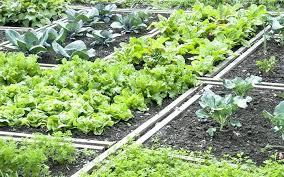 Veg Garden Layout Veg Garden Image Of Build Raised Vegetable Garden Layout Unique