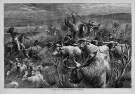 Image Host by Cattle Rustling The Handbook Of Texas Online Texas State