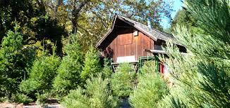 Santa Cruz County Christmas Tree Farms by Ormsby Cutoff Pch Traveler