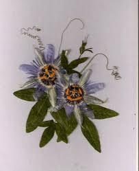 just flowers florist 560 best pressed flowers images on pressed flower