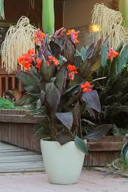 grow these tropical plants on your deck or in your garden with