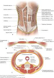 Picture Of Abdomen Anatomy Chapter 7 Anterior Abdominal Wall The Big Picture Gross