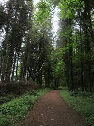 Ballyhoura Forest Luxury Homes by Ballyhoura Way The Ireland Way