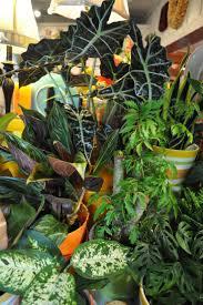 Easy House Plants 335 Best Gardening House Plants Images On Pinterest Plants
