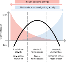 promoting longevity by maintaining metabolic and proliferative