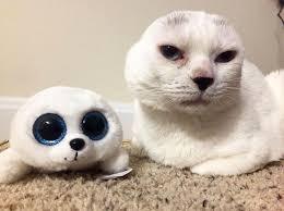 Cat Instagram Otitis The Instagram Cat Who Lost His Ears