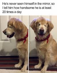 Silly Dog Meme - 20 hilarious dog memes cute overload babamail