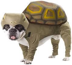 Hedgehog Halloween Costume 20 Absolutely Amazing Dog Halloween Costumes Style Motivation