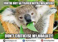 High Koala Meme - wet koala memes different types of funny animal memes