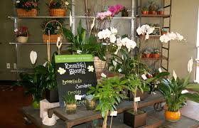 flower shops in san diego voted best florist in san diego san diego ca flowers same day