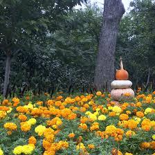 Botanical Gardens Dallas by Delight U0026 Decorum Place To Visit Dallas Arboretum
