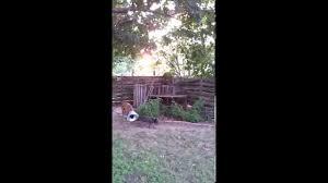 abr splinter aka coney conehead august 2014 youtube