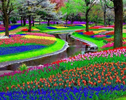 flower garden in amsterdam keukenhof flower park u2013 holland magchildmagchild
