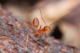 fire ants facts and control terro