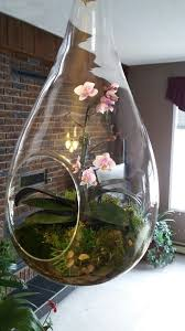 best 20 orchid terrarium ideas on pinterest u2014no signup required
