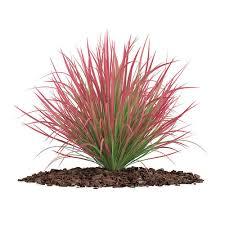 ornamental grass 4 3d model cgtrader